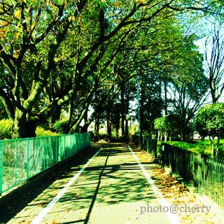 秋の小道.jpg